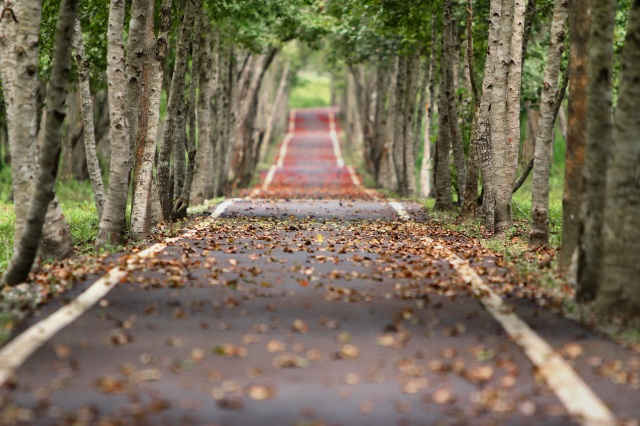 woodland-road-falling-leaf-natural-38537